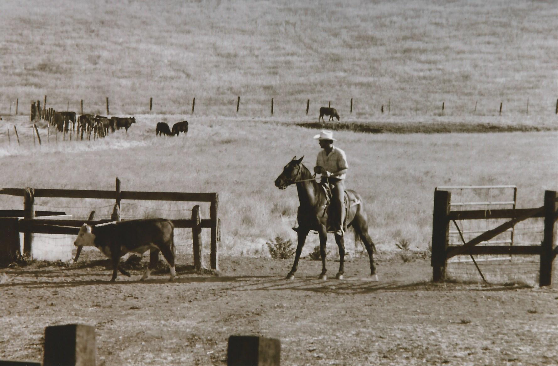Nielsen cowboy in Dougherty Valley